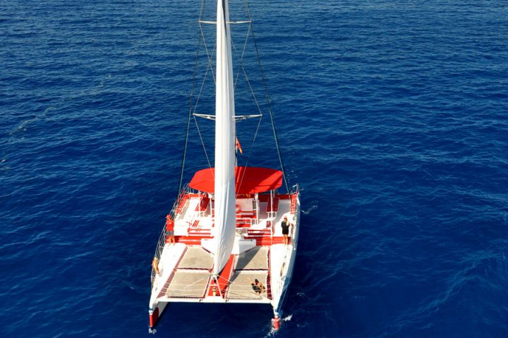 Whale Watching & Listening Tour in Tenerife - 907