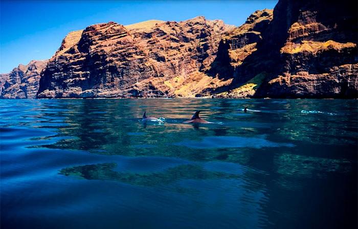 Tournée d'observation et d'écoute des baleines à Los Gigantes - 919