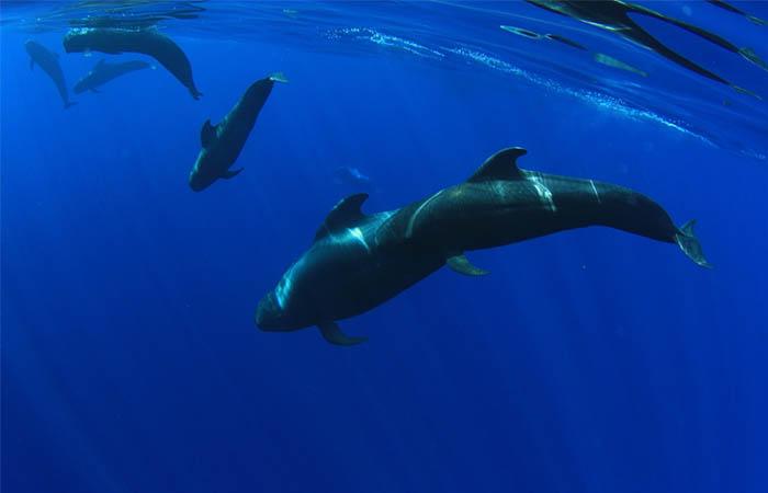 Tournée d'observation et d'écoute des baleines à Los Gigantes - 916