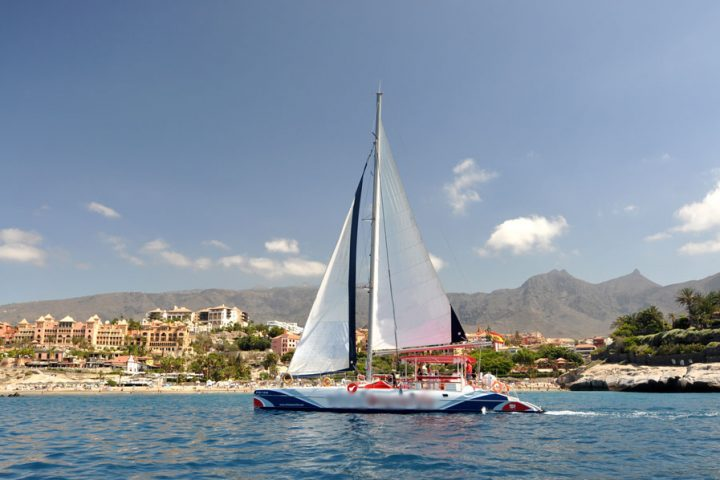 Whale Watching & Listening Tour in Tenerife - 909