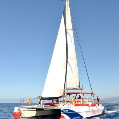 white paradise tenerife catamaran whale and dolphine listening tour - Whale Watching & Listening Tour to Los Gigantes