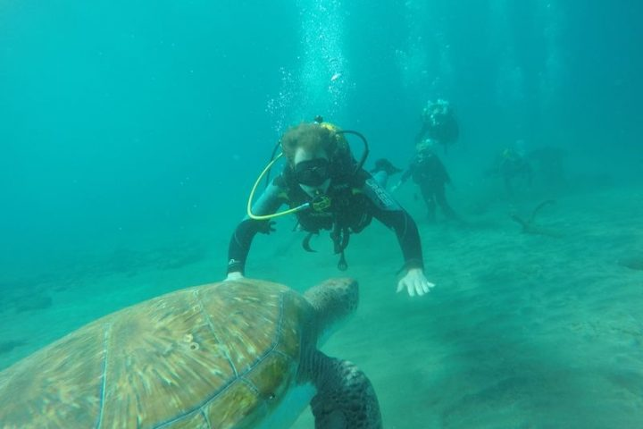 Open Water Diver Course in Tenerife - 1228