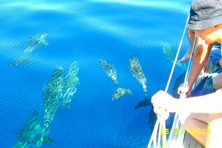 Zeilboot Charter Kosamui 3 uur walvissen kijken - 490
