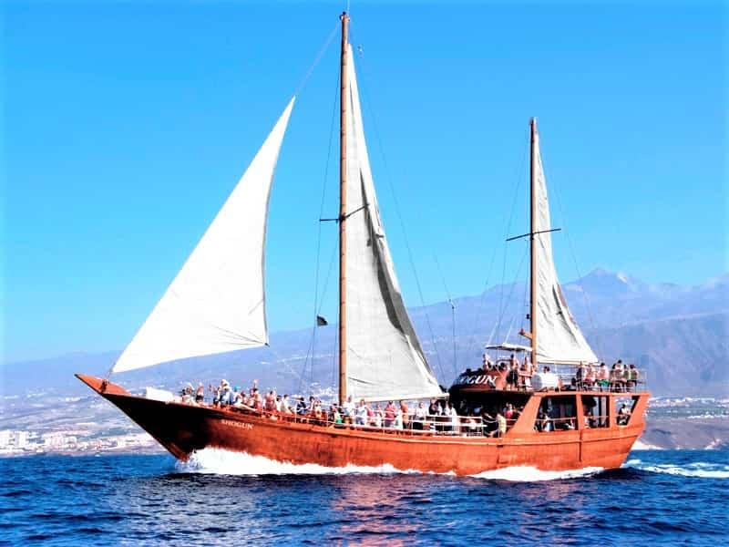 Tenerife Boat Trip to Los Gigantes with Shogun
