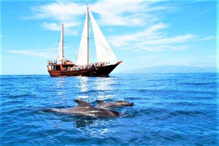 Tenerife laevareis Los Gigantes'ile koos Shoguniga - 7264
