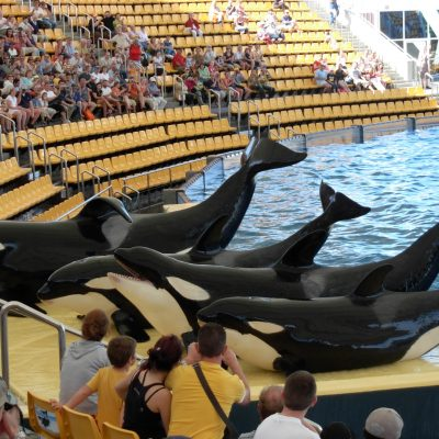 Loro Parque Tenerife with Transport - Loro Parque Tickets & Transport van Noord & Zuid