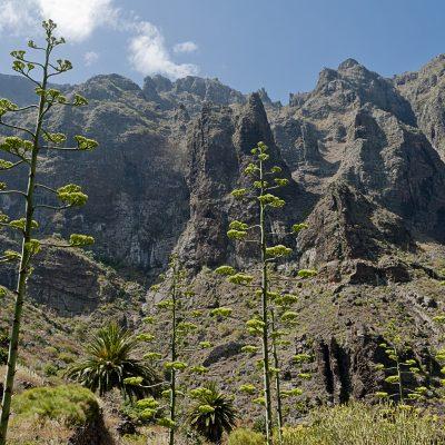 Tenerife Trekking Masca Canyon - Tenerife Senderismo Cañón de Masca