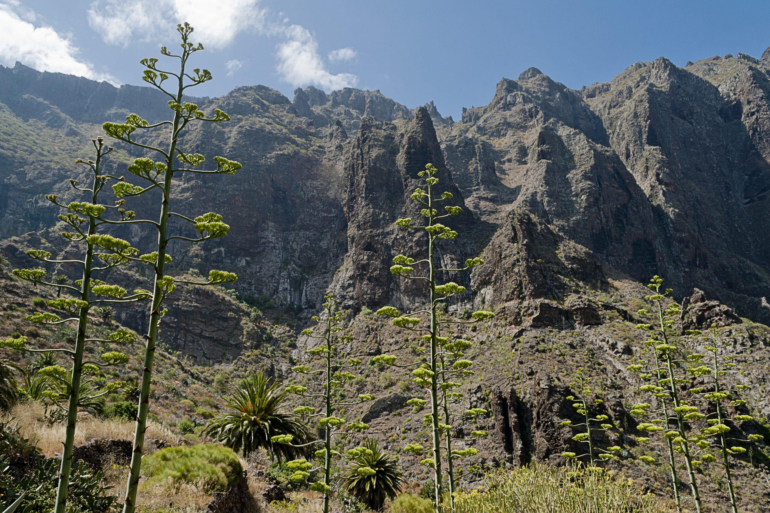 Caminhadas em Tenerife, no Masca Canyon