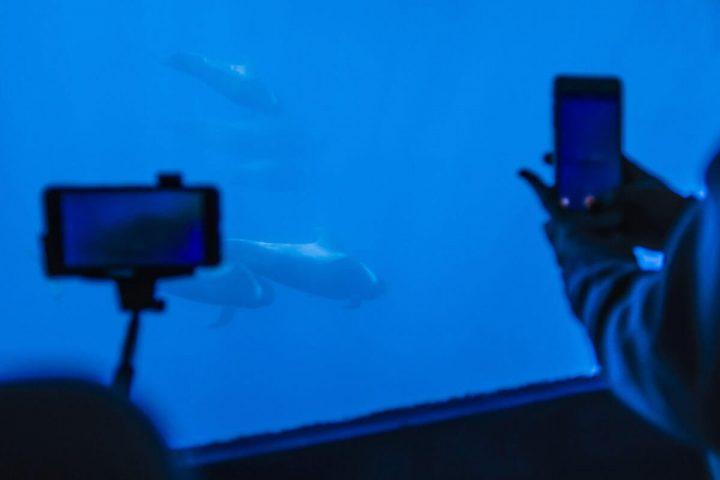 4,5 timmars katamarantur på Teneriffa med Royale Delfin till Los Gigantes - 1609