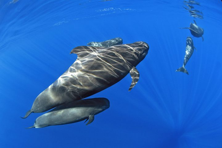4,5 timmars katamarantur på Teneriffa med Royale Delfin till Los Gigantes - 1614
