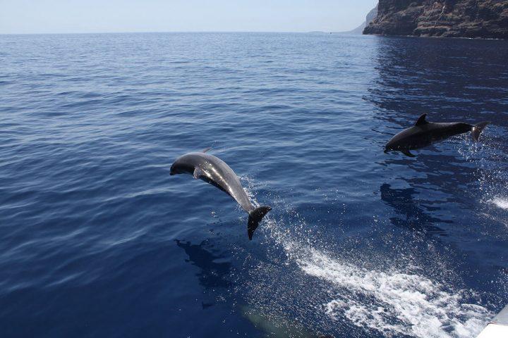 4,5-godzinna trasa katamaranem na Teneryfie z Royale Delfin do Los Gigantes - 1603