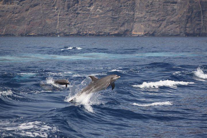 4,5-godzinna trasa katamaranem na Teneryfie z Royale Delfin do Los Gigantes - 1604