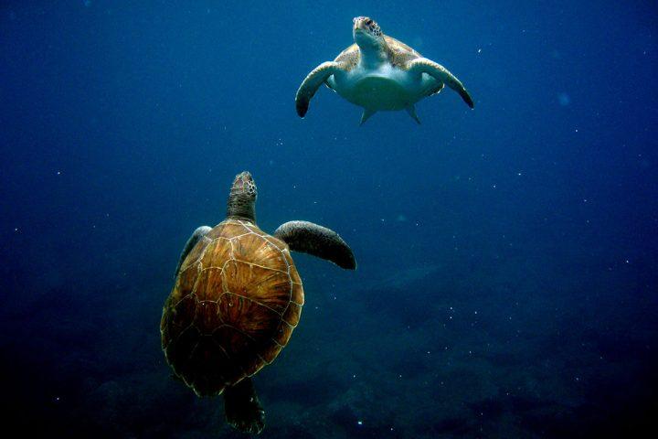 4,5 timmars katamarantur på Teneriffa med Royale Delfin till Los Gigantes - 1605