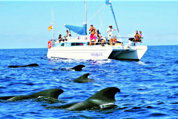 Excursion Privada para grupos en Catamaran en Tenerife, Costa Adeje - 565