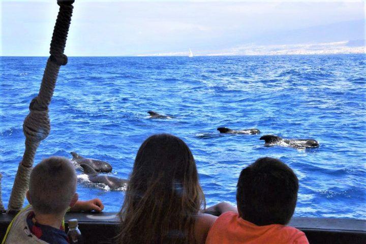 Location de bateaux vikings à Tenerife - 589