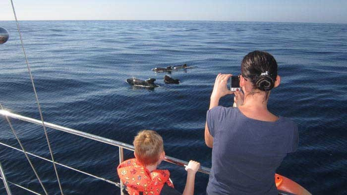 Eden Catamaran – Wahles or dolphin watching in Tenerife - 797