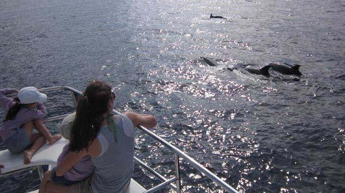3h Whale Watching Tour in Tenerife with Eden Catamaran - 798