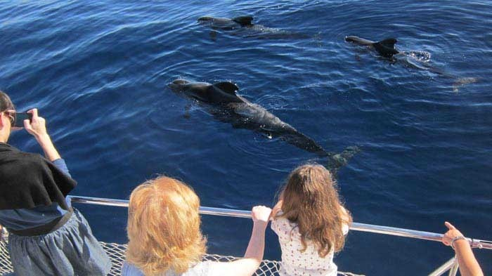 Eden Catamaran – Wahles or dolphin watching in Tenerife - 800