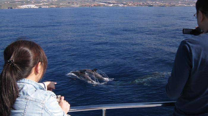 Eden Catamaran – Wahles or dolphin watching in Tenerife - 801