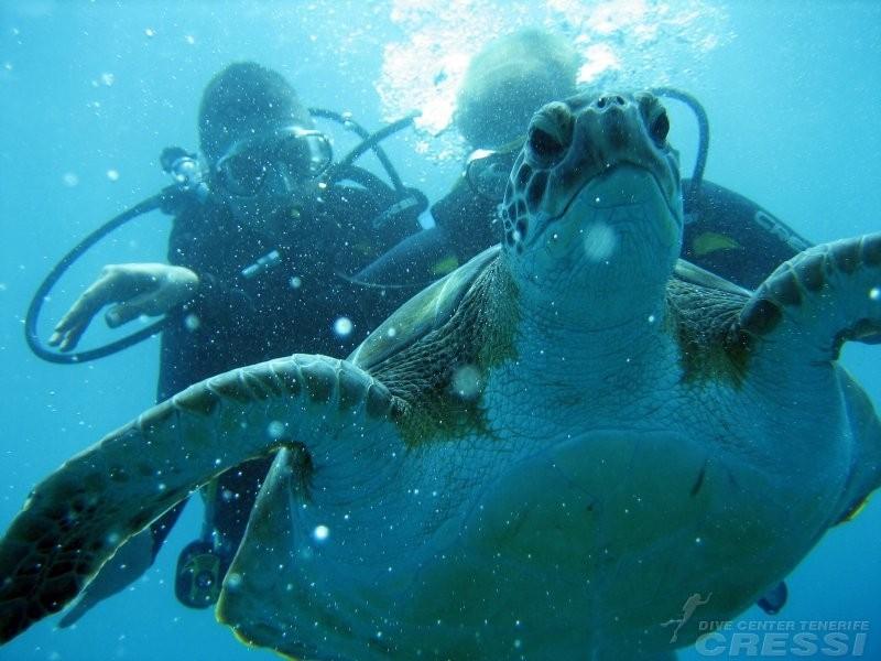Tenerife PADI Curso Avançado de Mergulhador de Águas Abertas PADI