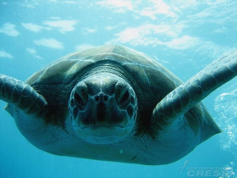 Cours de plongée sous-marine PADI à Tenerife