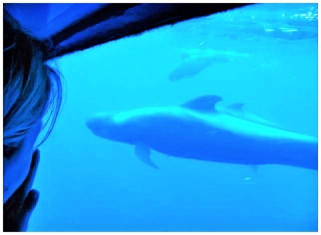 Val- och delfinskådningsturer i Costa Adeje