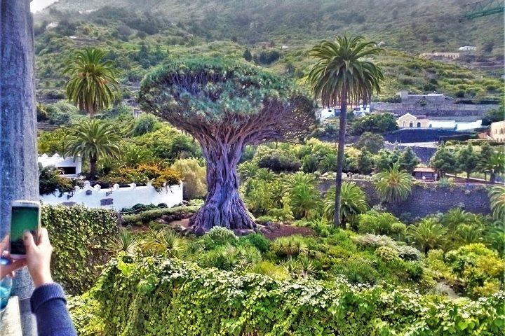 Tenerife Island Tour Teide – Masca - 956